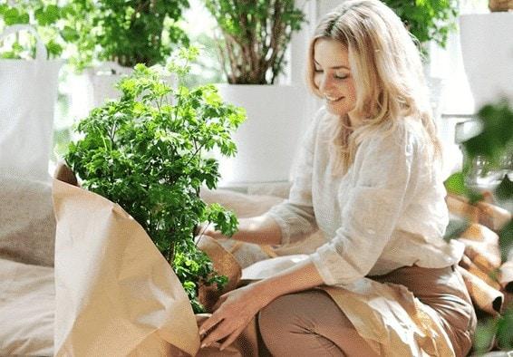 j aime mes plantes e1496573196269