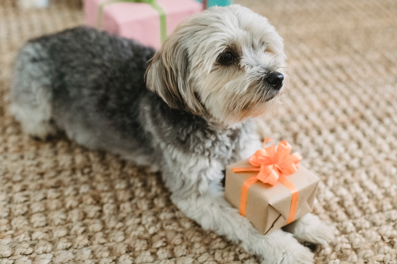 Must Know Tips to Help Make Your Pet Famous
